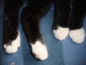 Neli valget puhast sokki